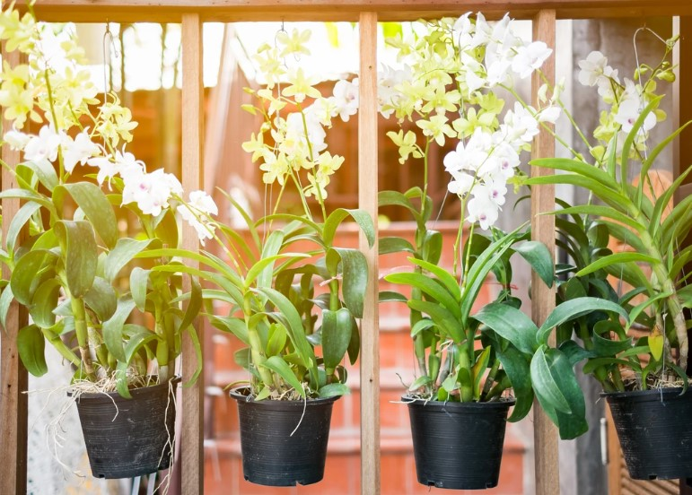 How Do You Take Care of Potted Orchids?