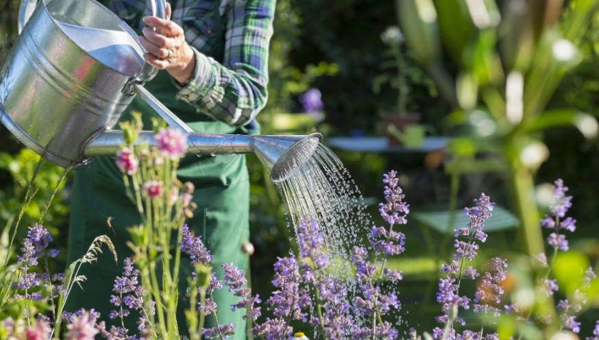 How Often Should You Water Your Outdoor Plants?